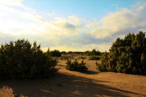 The sand dunes of Halikouna Beach